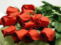 rose_2.jpg